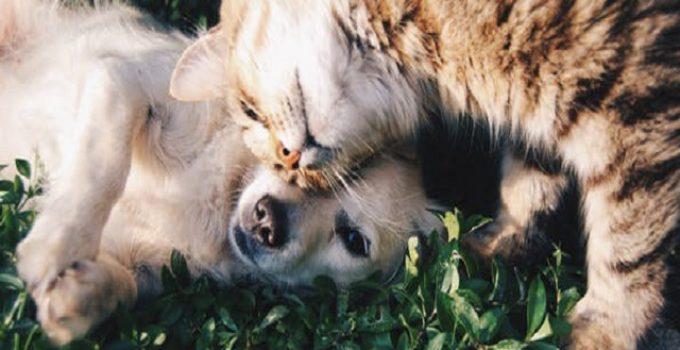 Hund och katt som gosar
